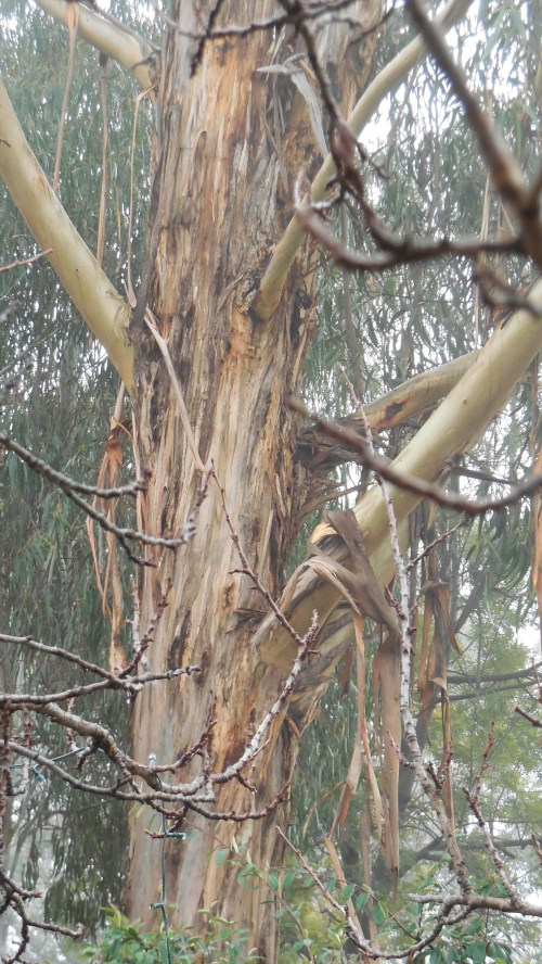 Sonya Heaney Oksana Heaney 2nd July 2013 Canberra Fog Tree