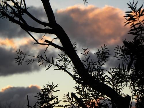 Sonya Heaney Oksana Heaney Canberra Sunset 30th August 2013