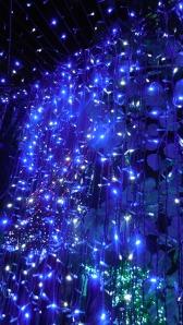 World Record Christmas Lights Canberra Australia 21st December 2013 Sonya Heaney Oksana Heaney3