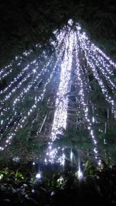 World Record Christmas Lights Canberra Australia 21st December 2013 Sonya Heaney Oksana Heaney5