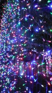 World Record Christmas Lights Canberra Australia 21st December 2013 Sonya Heaney Oksana Heaney7