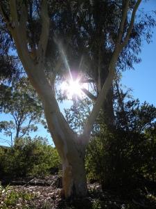 Canberra Australia Hot Morning 17th January 2014