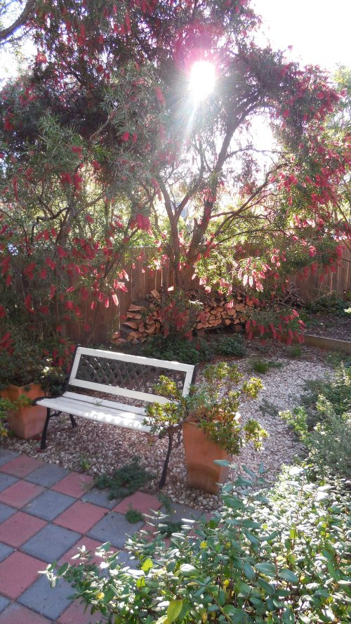 Autumn Garden Canberra Australia 1st May 2014 Sonya Heaney Oksana Heaney