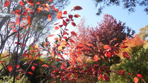 Autumn in Canberra Australia 13th May 2014 Sonya heaney Oksana heaney