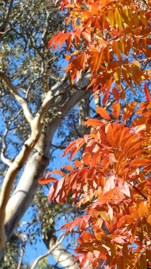 Orange Autumn Canberra Australia 12th May 2014 Sonya Heaney Oksana Heaney