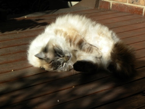 1 Obi Cat Canberra Australia 20th August 2014 Sonya Heaney Oksana Heaney