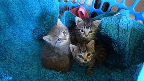 Kittens Qeanbeyan Australia 2nd November 2014