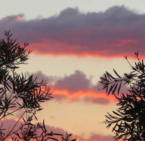 Sunset Canberra Australia 28th November 2014 Sonya Heaney.