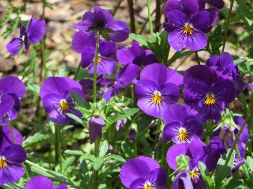 Flowers Garden Tuggeranong Canberra Australia 8th December 2014 Sonya Heaney 1