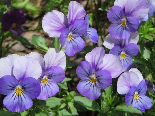 Flowers Garden Tuggeranong Canberra Australia 8th December 2014 Sonya Heaney 2