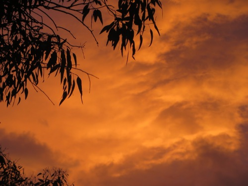 Sunset Canberra Australia 1st December 20014 Sonya Heaney