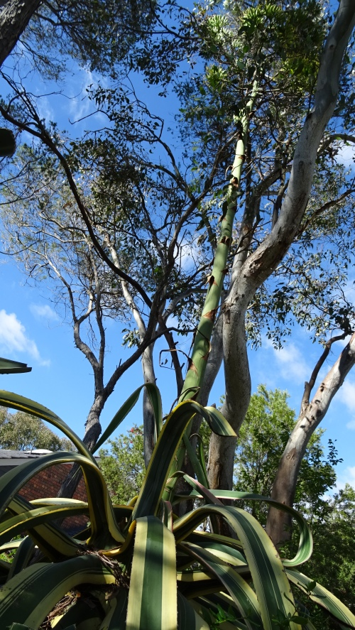 Cactus Garden Tuggeranong Canberra Australia 25th January 2015 Sonya Heaney Oksana Heaney 1
