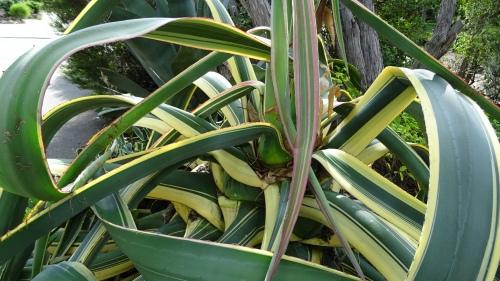 Cactus Garden Tuggeranong Canberra Australia 25th January 2015 Sonya Heaney Oksana Heaney 2