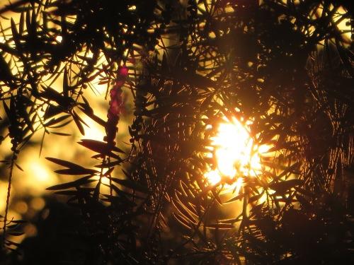 Sunset Tuggeranong Canberra Australia 22nd January 2015 Sonya Heaney