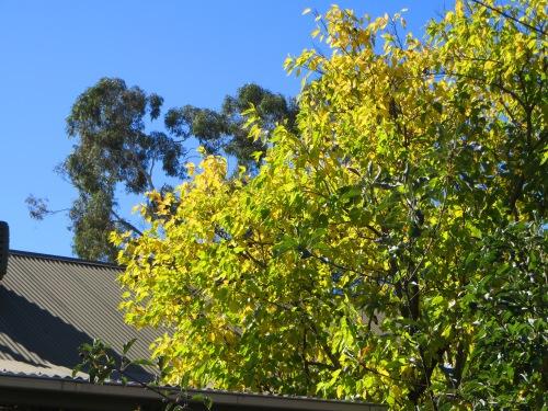 Autumn Tuggeranong Canberra Australia Sonya Heaney 9th April 2015 2