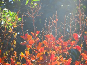 Autumn Tuggeranong Canberra Australia Sonya Heaney 9th April 2015 3