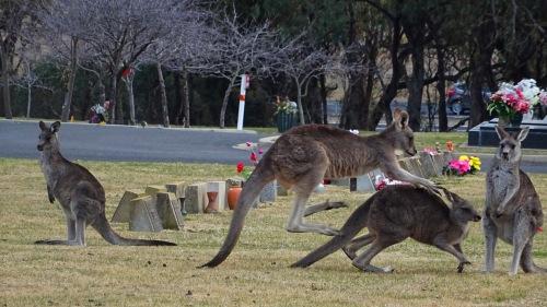 Kangaroos Lawn Cemetery Queanbeyan Australia 11th July 2015 1 Sonya Heaney Oksana Heaney Winter