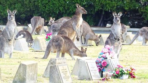 Kangaroos Lawn Cemetery Queanbeyan Australia 11th July 2015 Sonya Heaney Oksana Heaney Winter