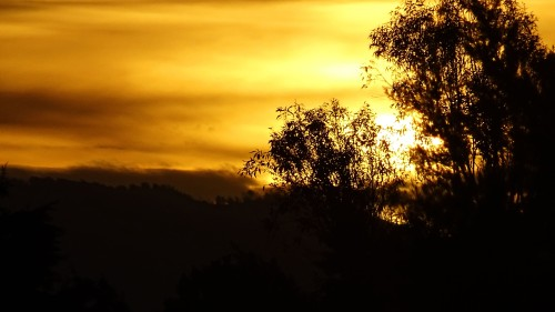 Canberra bush sunset summer Tuggeranogn Sonya Heaney Australia 1st January 2015