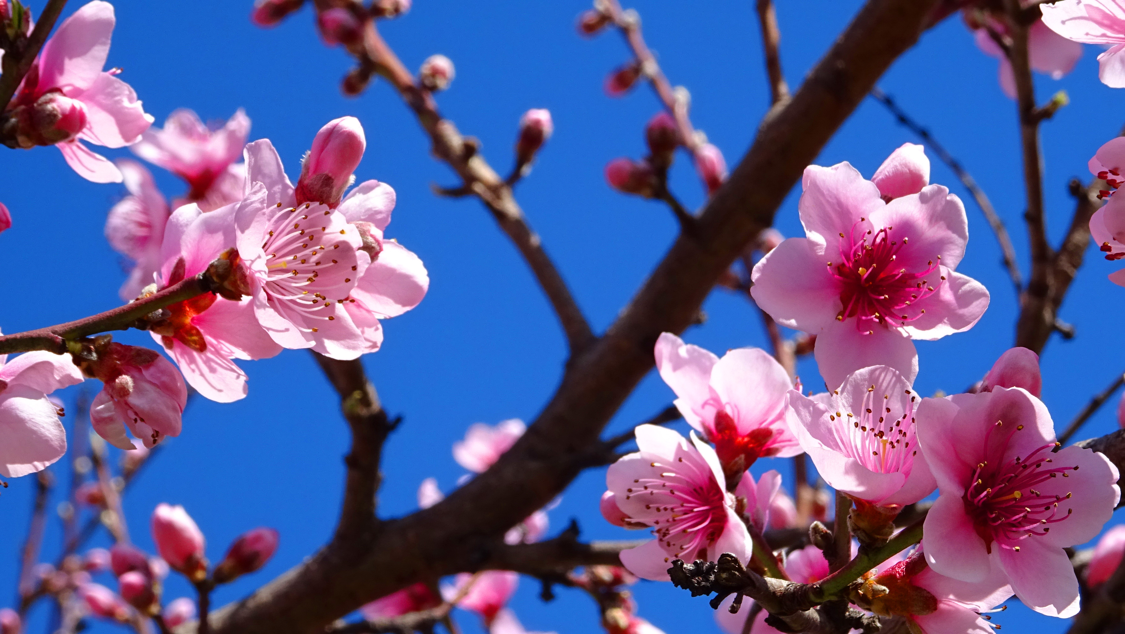Spring Capital Life And Random Beauty