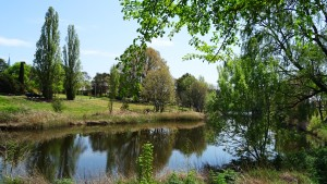 Qeanbeyan New South Wales Australia Queanbeyan River Sonya Heaney Oksana Heaney Spring Nature