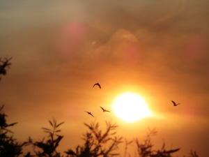 Canberra Australia Sunset Birds Spring Sonya Heaney 18th November 2015 Sky Clouds Sun Garden Tuggeranong Nature