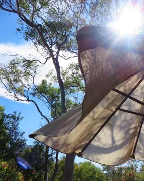 Hot Day Canberra Australia 19th November 2015 Garden Spring Sonya Heaney Umbrellas Trees