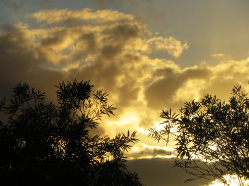 Christmas Eve Sunset Canberra Australia 24th December 2015 Sonya Heaney Sky Clouds Garden Sun Nature