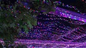 Christmas lights in Canberra Australia Sonya Oksana Heaney 5th December 2015
