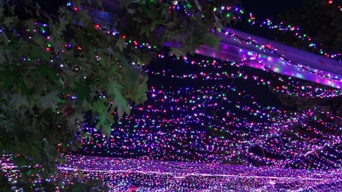 Christmas lights in Canberra Australia Sonya Oksana Heaney 5th December 2015