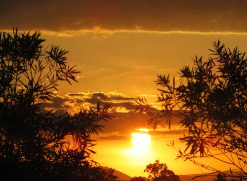 New Year's Eve Sunset Canberra Australia 31st December 2015 Sonya Heaney Sky Sun Garden Sunset Summer Nature