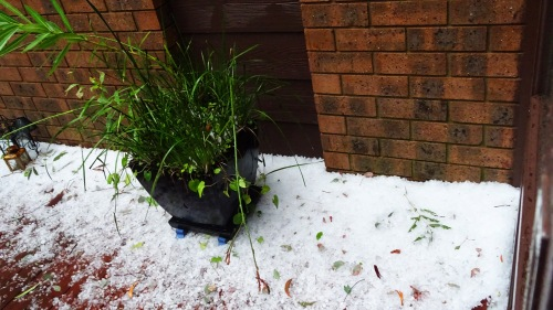 Hail Storm Gowrie Tuggeranong Canberra Australia Summer 25th January 2015 Sonya Heaney Nature