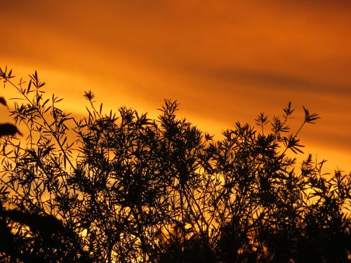 Monday Sunset Tuggeranong Canberra Austtralia Sonya Heaney 22nd February 2016 Sky Orange Summer Nature