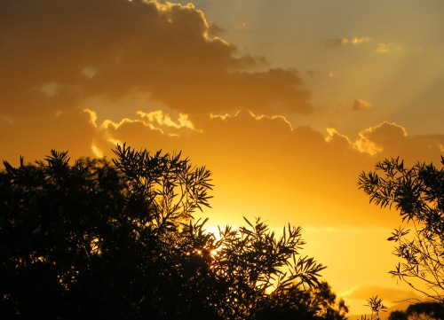 Sunset Canberra Australia Sonya Heaney 28th February 2016 Summer Clouds Sky Garden Nature