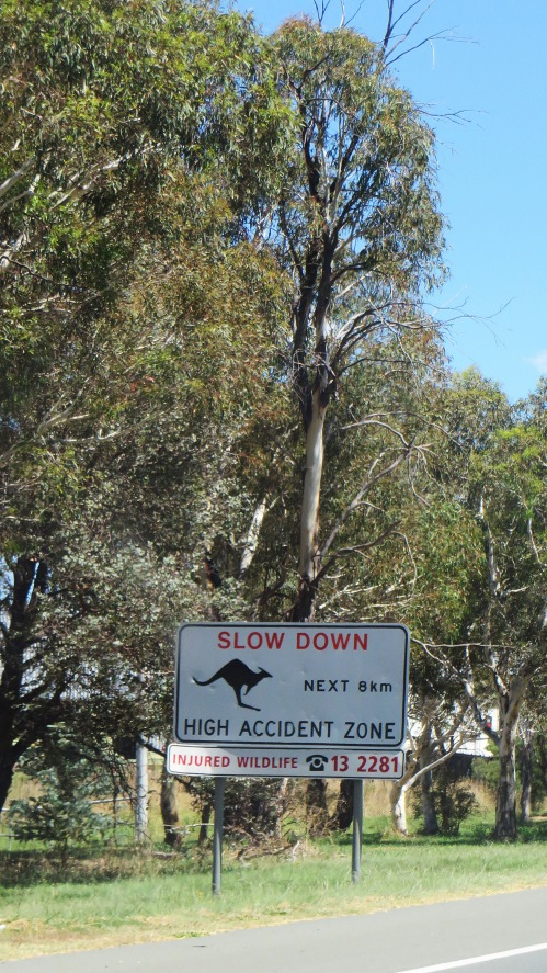Watch for Kangaroo Sign Canberra Australia Summer Sonya Heaney 19th February 2016