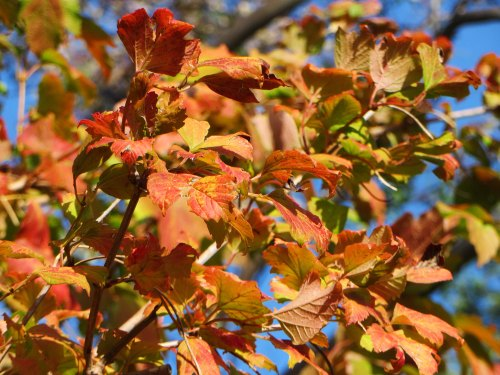 Autumn Leaves Garden Canberra Australia 10th April 2016 Nature