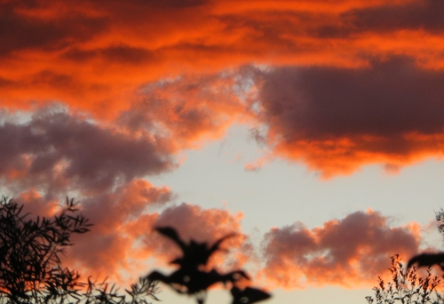 Monday Sunset Tuggeranong Canberra Australia Sonya Heaney Autumn 11th April 2016 Sky Clouds Nature Garden IMG_8166IMG_8176