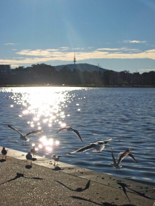 Winter Lake Burley griffin Canberra Australia Sonya Heaney Seagulls Telstra Tower Black Mountain Sun Nature 30th July 2016