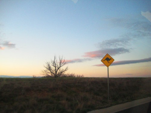 canberra-to-queanbeyan-australia-sunday-sunset-sonya-heaney-on-the-road-11th-september-2016-kangaroo-sign