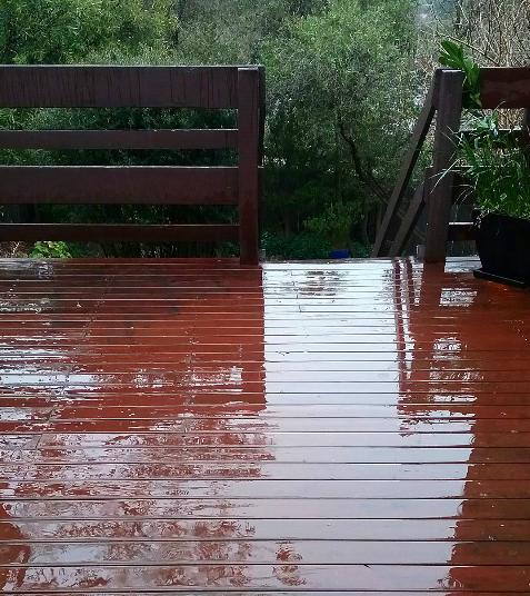 Rainy Afternoon Garden Canberra Australia Sonya Heaney 2nd September 2016Rain Nature