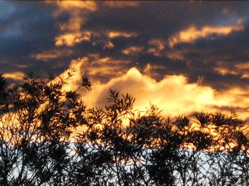 spring-sunset-canberra-australia-sonya-heaney-garden-sky-clouds-22nd-september-2016