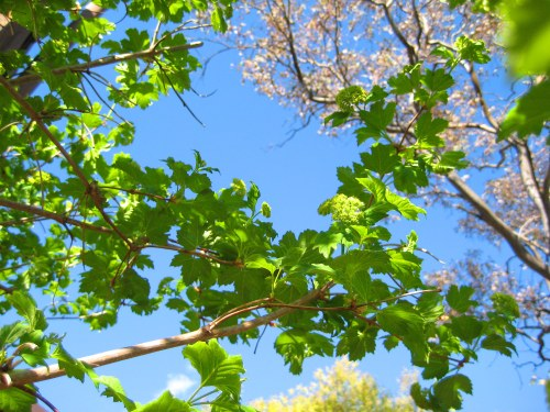 spring-sunshine-blue-sky-sonya-heaney-canberra-australia-14th-october-2016-garden-nature