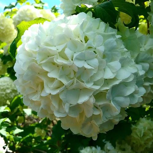 spring-flowers-sonya-heaney-canberra-australia-3rd-november-2016-nature-garden