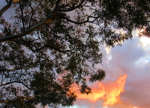 Autumn Sunset Sonya Heaney Canberra Australia 16th March 2017 Tree Sky Clouds Garden Nature
