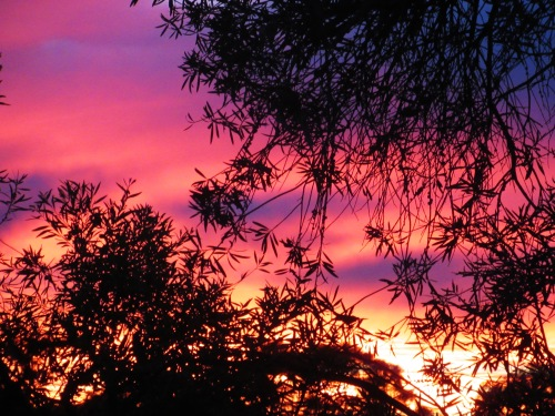 Thursday Evening Winter Sunset Canberra Australia Sonya Heaney 22nd June 2017 Sky Clouds Trees Nature.