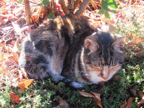 Winter Sunshine Cat Garden Canberra Australia Sonya Oksana Heaney 6th June 2017 1