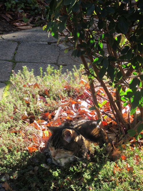 Winter Sunshine Cat Garden Canberra Australia Sonya Oksana Heaney 6th June 2017 3