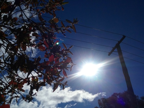 Sunny Monday Afternoon Canberra Australia Winter Sonya Heaney Sunshine 24th July 2017 Blue Sky Nature