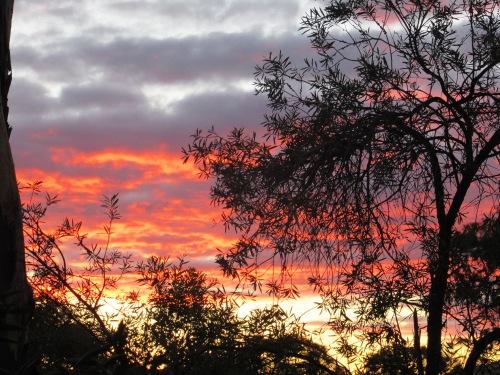 Winter Sunset Canberra Australia Sonya Heaney 2nd August 2017 Sky Clouds Garden Nature