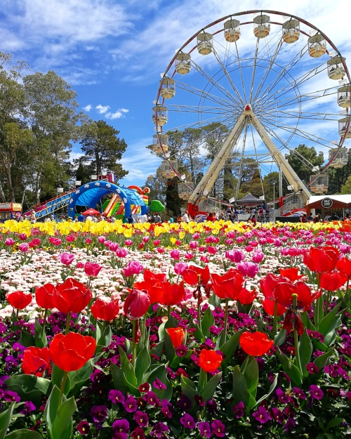 Ferris Wheel Floriade Canberra Australia 7th October 2017 Sonya Heaney Oksana Heaney Flowers Spring Commonwealth Park Lake Burley Griffin Nature